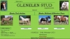 Glenelen Shetland and Miniature Pony Stud