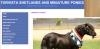 Torvista Shetland & Miniature Pony Stud